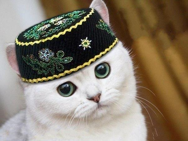 Языки России: ВСЕ УРОКИ!