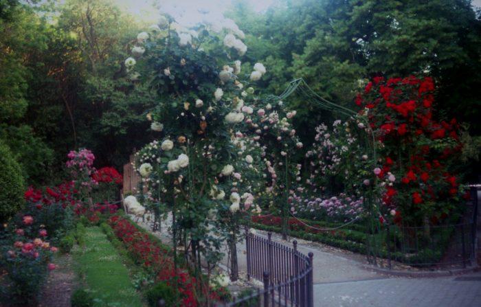 Уютный сад в Вальядолиде