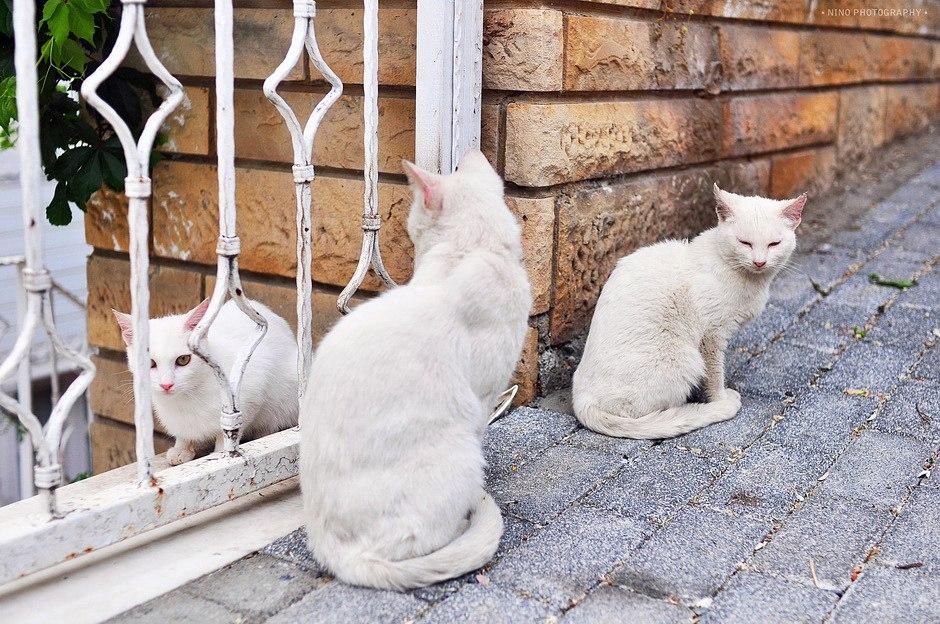 Город кошек, или умилительный Стамбул