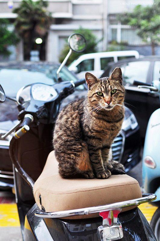 Кот на мотоцикле