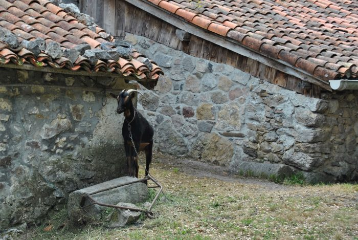 Черный козел охраняет баскский дом от подозрительных фотографов