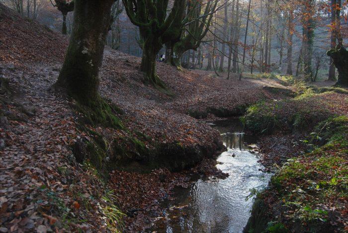 Лес Оцаррета осенью