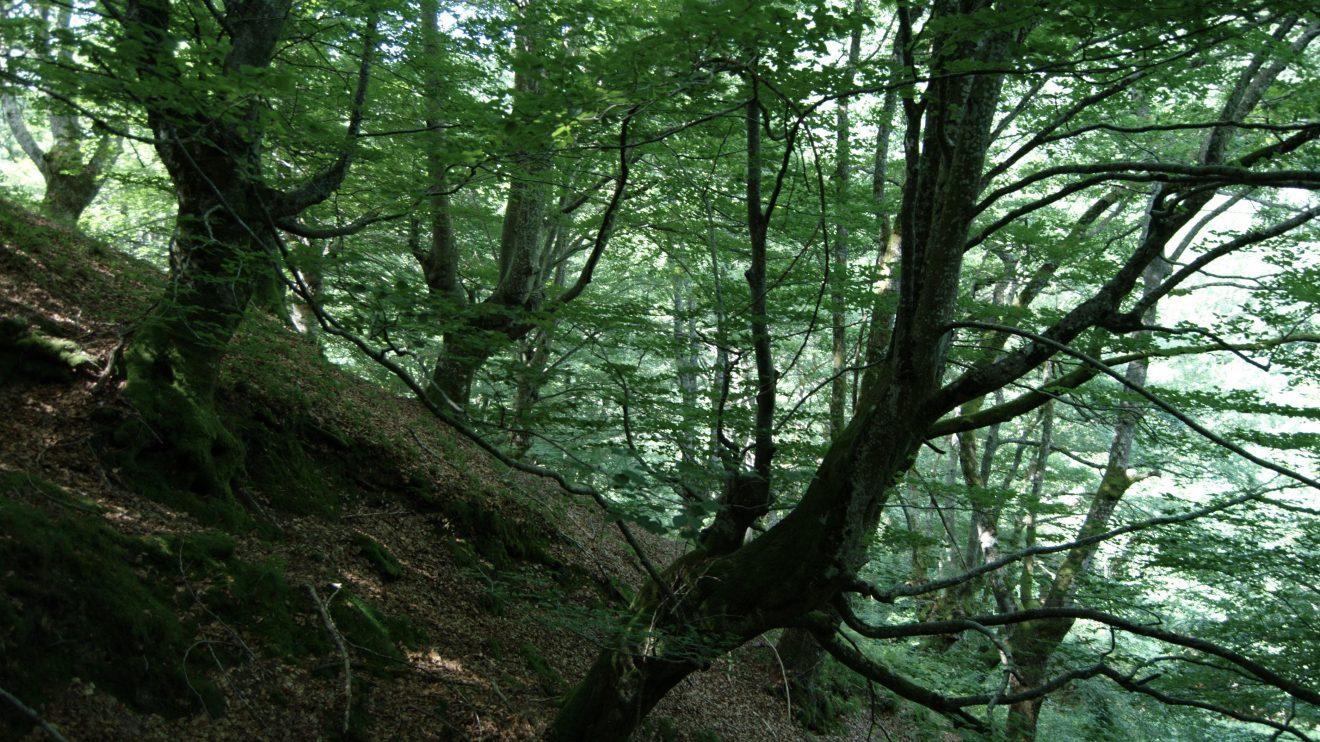 По следам драконов, русалок и леших: Страна Басков мифологическая