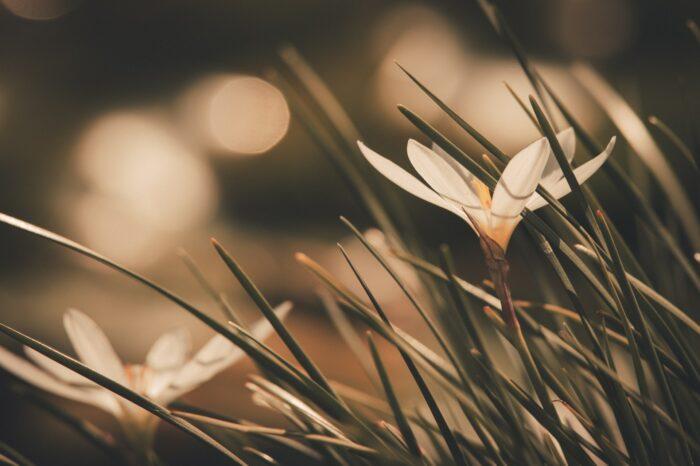 Что подарит нам бог весны?